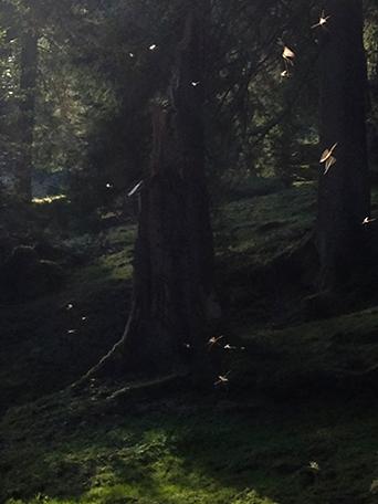 Wald mit Mücken 2014